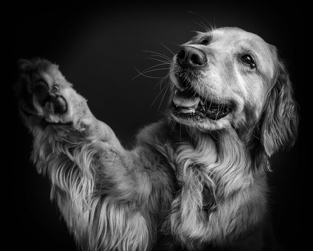 pet photography, one of a kind