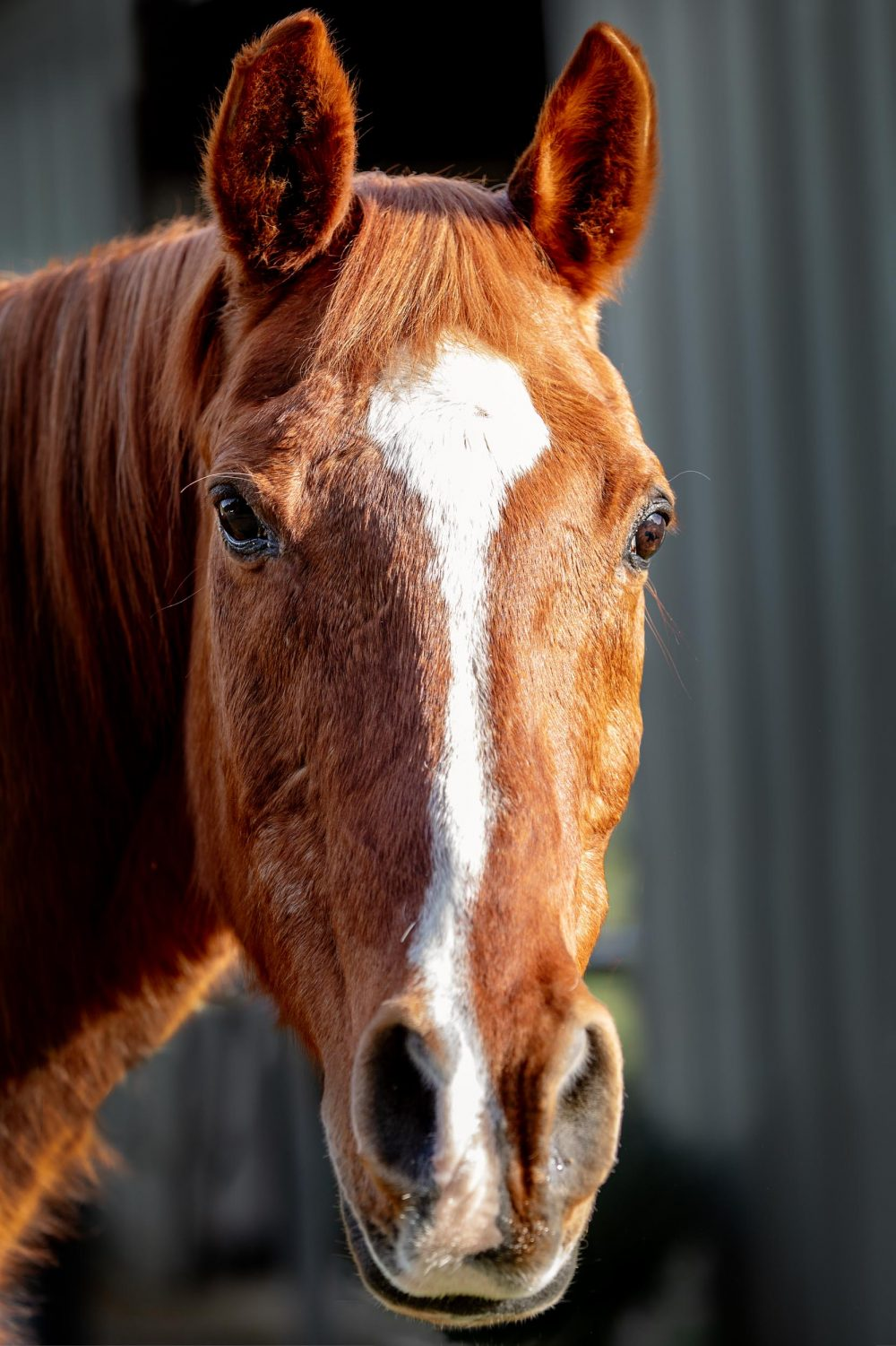 Equine professional photography