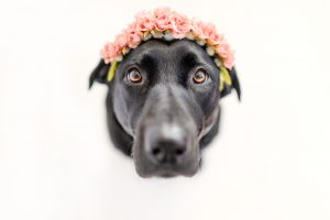dog photography with flower crown