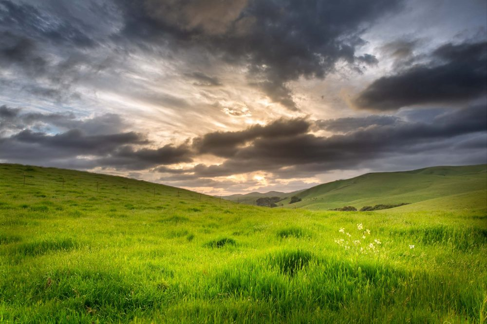 Hillsides and Pastures of San Ramon|California countryside