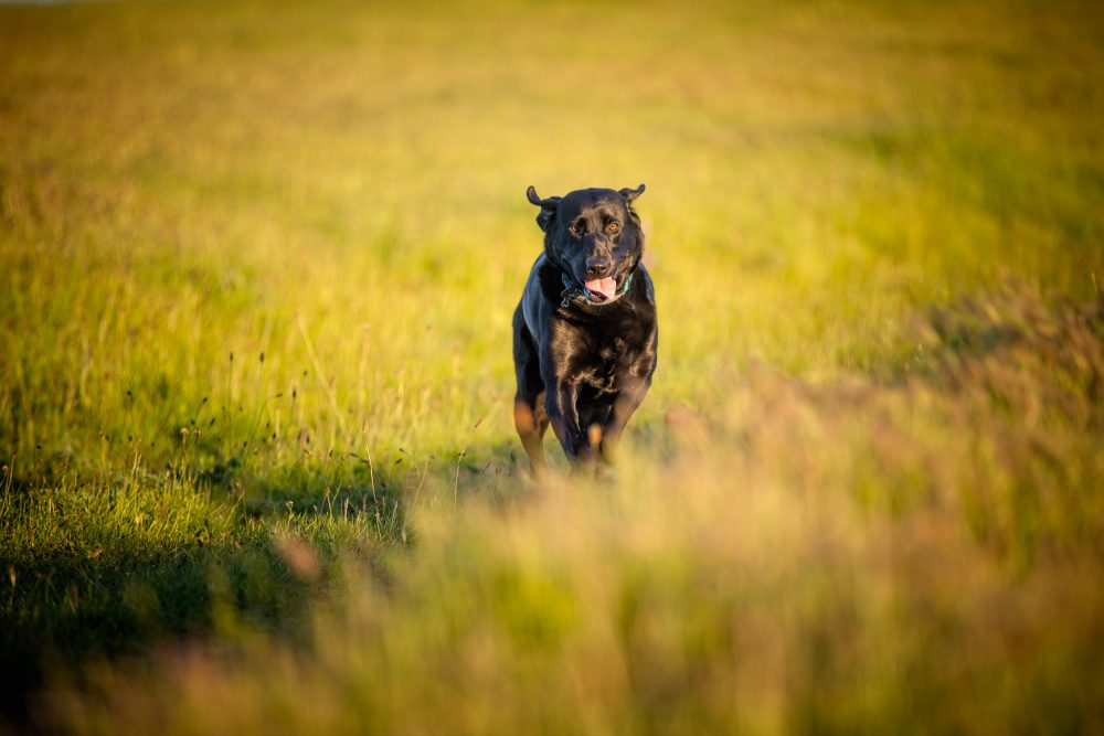 Running dog photo