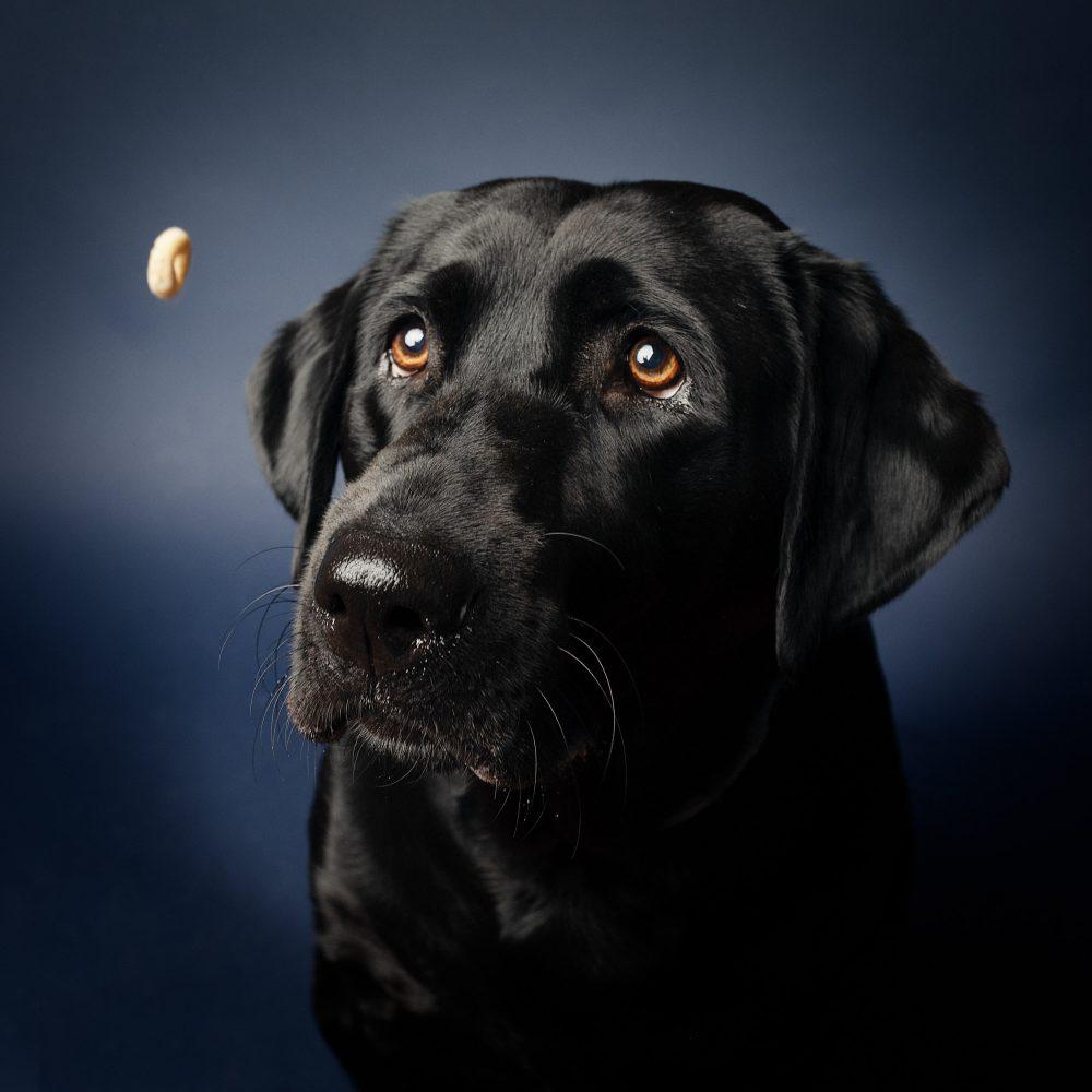 Pet Photography Tips|Bay Area Pet Photographer|Dog Photoshoot|San Francisco